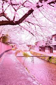 116 best images about Cherry Blossom on Pinterest
