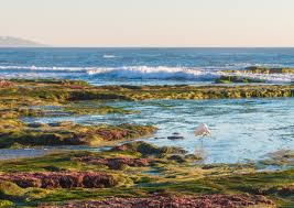 Tide Chart Coronado Best Tide Pools In San Diego Top 8 Tide Pools La Jolla Mom