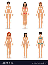 Collection Female Body Template Royalty Free Vector Image