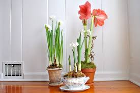 White Paper Flower Bulbs Flowers Are A Wonderful Way To Brighten A House But When