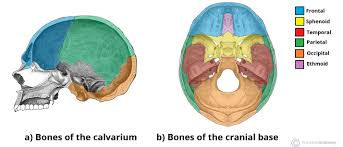 Between each vertebra is a small cushion called a disk. Bones Of The Skull Structure Fractures Teachmeanatomy