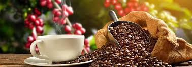 Kona Coffee Guide & Tasting Tours | Big Island Guide