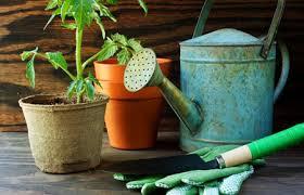 epsom salt gardening. Gardening With Epsom Salt S