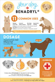 Benadryl For Dogs Uses Side Effects Dosage Overdose Vet