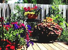 Small Picture Container Garden Flowers Full Sun Ideas Home Inspirations Flower