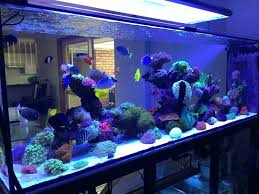 led lights for r fish tanks t5 lighting reef you require advanced equipment freshwater in addition
