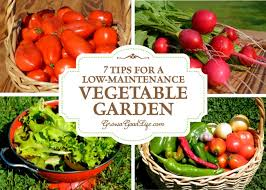 tips for a low maintenance vegetable garden