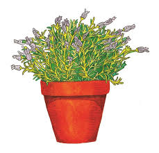 ilration of green plant with small purple flowers in a terra cotta pot