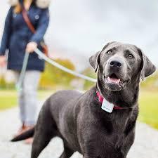 Купить <b>gps</b>-<b>трекер</b> для животных <b>tractive gps pet</b> tracking белый ...