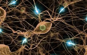 Estudian el efecto de moléculas naturales en la conciencia humana