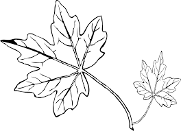 Small Picture Leaves Printable Templates Coloring Pages Firstpalette Com