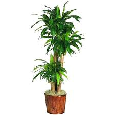 Best office plants no sunlight Natural Light Best Indoor Office Plants Best Office Plants No Sunlight Designs Direct Indoor Avril Paradise Best Indoor Office Plants Indoor Plants No Sun Best Indoor Office
