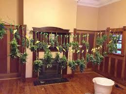 Perfect Grow Room Design