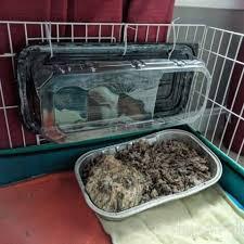 easy guinea pig litter box diy danielle