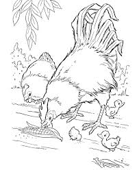 Small Picture Realistic Hen And Rooster Farm Animal Coloring Pages Animal