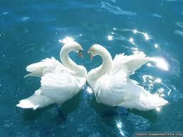 beautiful love birds on birds yamaha r6 and motogp