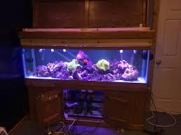125 Gallon Aquarium Light Hood 125 Gallon Anemone Tank Move Reef2reef Saltwater And Reef