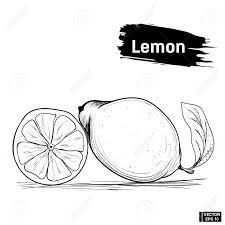 ベクター画像レモンのアウトラインの画像フルーツ柑橘系手書きでインクをスケッチします