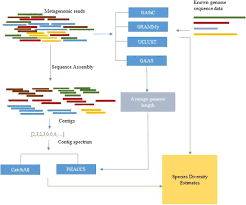 Species Diversity Definition Assessing Species Diversity Using Metavirome Data Methods And