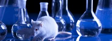 animal testing procon org