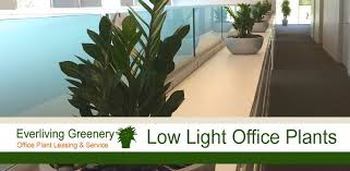 office greenery.  Greenery Plants The Need Low Light In An Office Setting  Everliving Greenery  Palatine IL For Office
