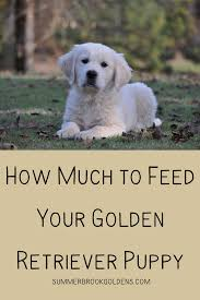Puppy Feeding Chart Golden Retriever How Much To Feed Your Golden Retriever Summer Brook