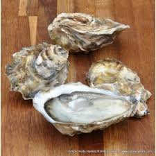 Oyster Identification Chart Oyster Species Uk Information Simply Oysters