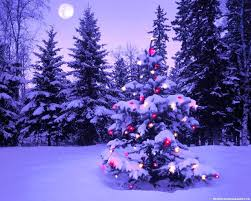 Full Image for Nice Christmas Trees Beautiful Decorated Trees And This  Beautiful Decorated Christmas Trees For ...