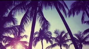 palm trees tumblr vintage. Psychedelic Palm Trees Tumblr Vintage E