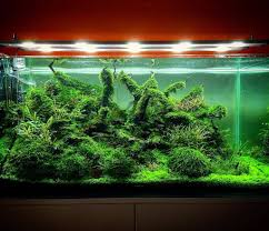 Low Light Cold Water Aquarium Plants Types Of Aquarium Moss For Aquascaping Different Aquatic