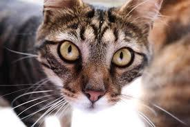 Antihistamine Dosage Chart For Cats Cat World