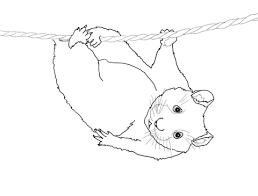 Leuke Hamster Hangt Aan Een Draad Kleurplaat Gratis Kleurplaten