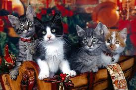 Free Desktop wallpaper for Cat lovers, Free Christmas Wallpapaer ...