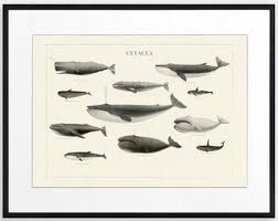 Whales By Size Chart Whale Size Chart Etsy