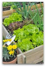 Small Picture Free Vegetable Garden Plans Vegetable Garden Planner Vegetable