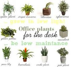 best indoor plants for office. Artificial Plants For Offices Office Landscapes Banana Tree Plant Best Indoor F
