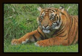 Tiger Color Chart Counted Cross Stitch Pattern The Tiger Is Watching You Color Chart Dmc Floss Chart Animal Series Just Print And Start Stitching