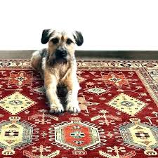 pet proof carpet area rugs medium size of australia best area rugs for pets