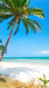 Beautiful beach,mobile wallpaper,palm ...