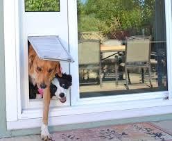 decorative dog doors. Dog Door Ideas Photos Also Big Homemade Decorative That Eye Cathcing Doors