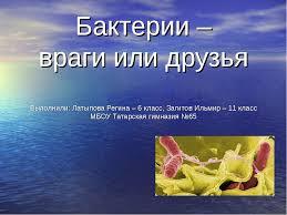 Бактерии Реферат Класс innovationfreg Реферат На Тему Бактерии 6 Класс