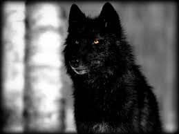 Black Wolf Wallpapers Top Free Black Wolf Backgrounds