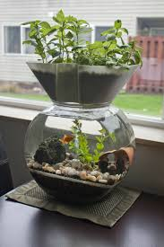 Self Cleaning Fish Tank Garden I Invented This The Goldfish Garden Self Cleaning Aquaponic