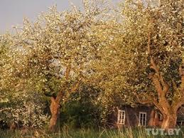 В Воложинском районе строится крупнейший свинокомплекс Жители  В Воложинском районе строится крупнейший свинокомплекс Жители добились общественных слушаний