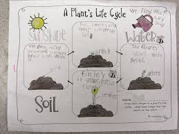 Plant Life Cycle Anchor Chart 1st Grade Www