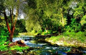 Image result for forest paradise wallpaper