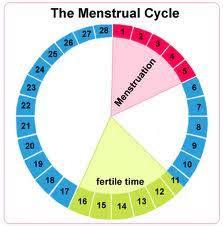 Ovulation Chart Boy Girl Choosing Baby Gender Using Ovulation Calculator Boy Or Girl