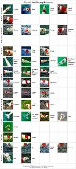 Shrimp Grading Chart The History Of Neocaridina Shrimp