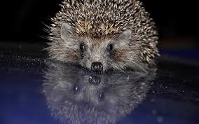 awesome hedgehog free background id 241834 for hd 1920x1200 puter
