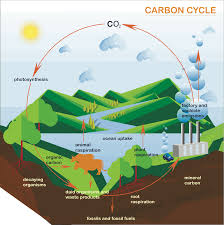 Carbon Cycle Flow Chart Processes And Pathways Of The Carbon Cycle A Level Geography